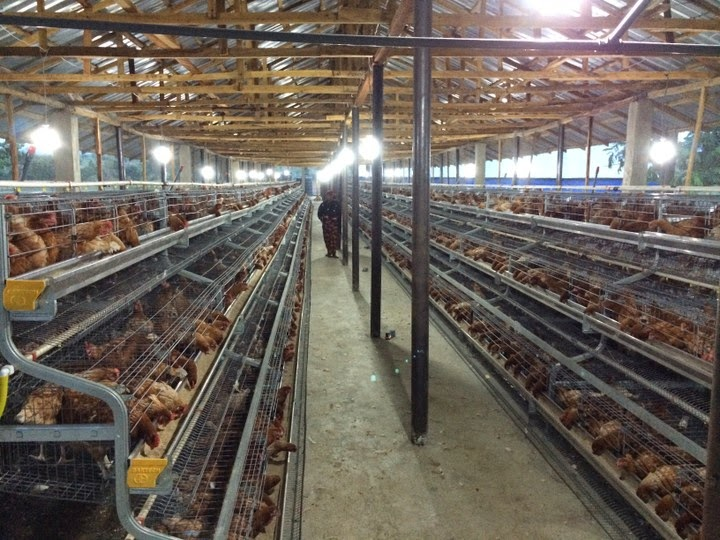 Business Plan Template For Poultry Farming | Poultry Farming Business Plan In India Ppt